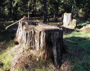 Muistomerkki menneiden vuosikymmenten suurista kaivutöistä ja suurtehopumpuin ruiskutetuista kukkuloita Iowa Hillin vuoristossa.